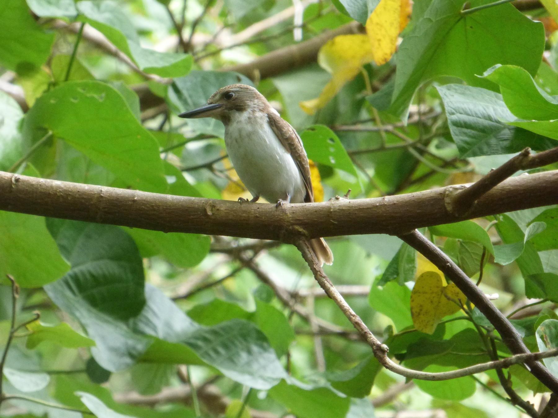 Society Kingfisher - sheryl mcnair