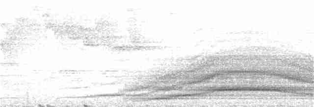 Wattled Guan - rudy gelis