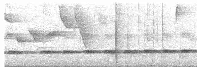 Brown Tinamou - CLAUDIO JORGE FILHO