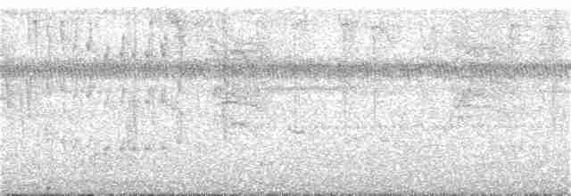 Little Tinamou - Patrick V