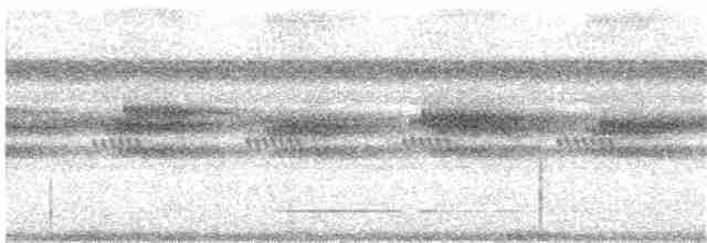 Solitary Tinamou - J. Quillen  Vidoz