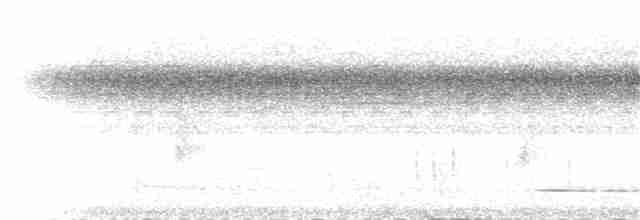 Thicket Tinamou (cinnamomeus Group) - Jay McGowan