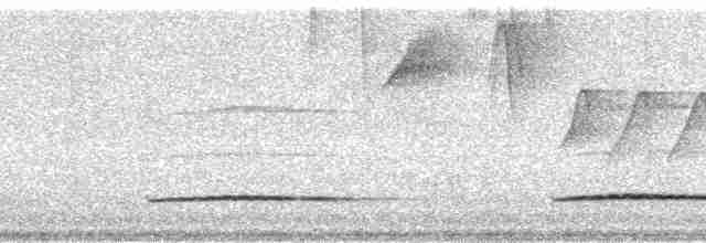 Little Tinamou - Rodman Ward