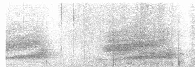 Southern Brown Kiwi (Stewart I.) - Simon Gorta