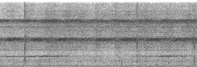 Variegated Tinamou - Paul A. Schwartz