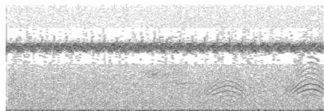 White-cheeked Pintail - George Armistead