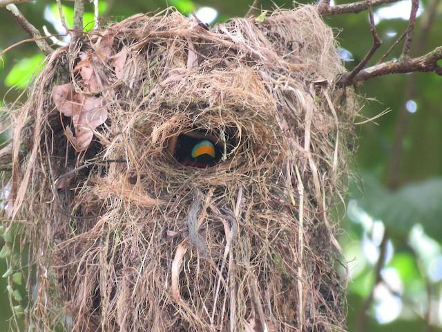 Bird in nest.